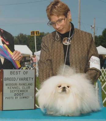 Ch. Windemere's Knight In White Satin Best of Breed