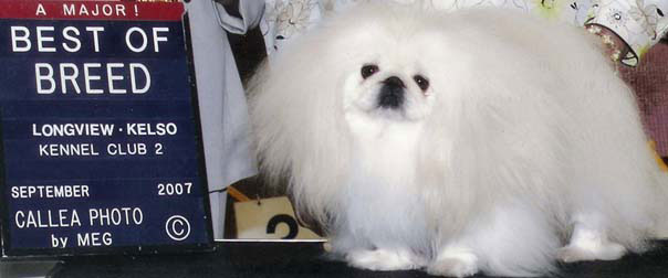 Ch. Windemere's Rond-A-Vu On The Ice - Best of Breed